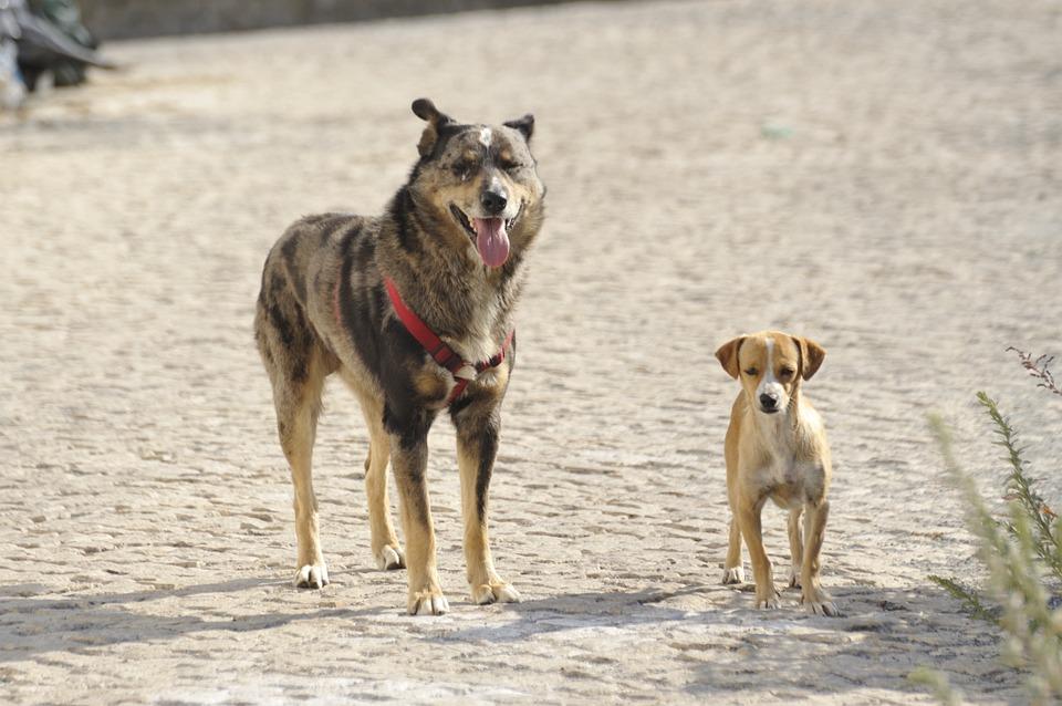 Marbella obligará a sus ciudadanos a limpiar la orina de los perros