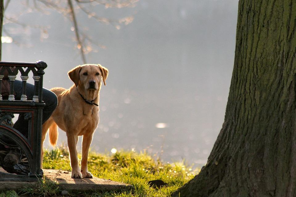 ¿La gente prefiere perros de raza?