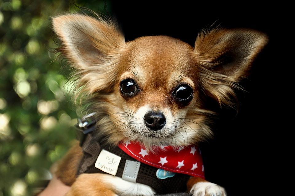 Novedades acerca los estudios de la edad en perros