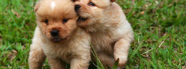 La fobia y el miedo a perder a nuestros amados perros