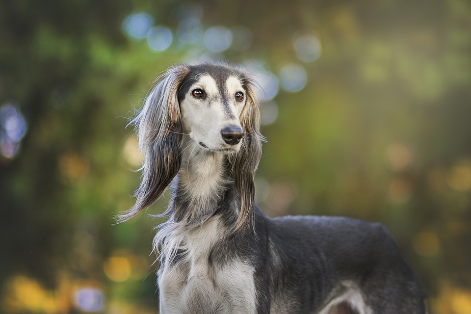 ¿Sabes qué existe la fobia a perder a los perros?