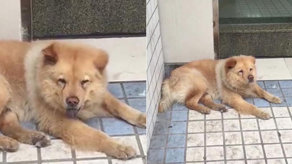 Xiongxiong el perro mas educado y noble de China