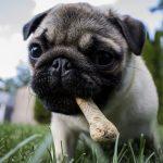 Descubre el peligro de la moda vegana para perros