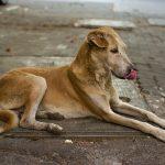 Abandonan 40 perros en pueblos de la costa de Málaga