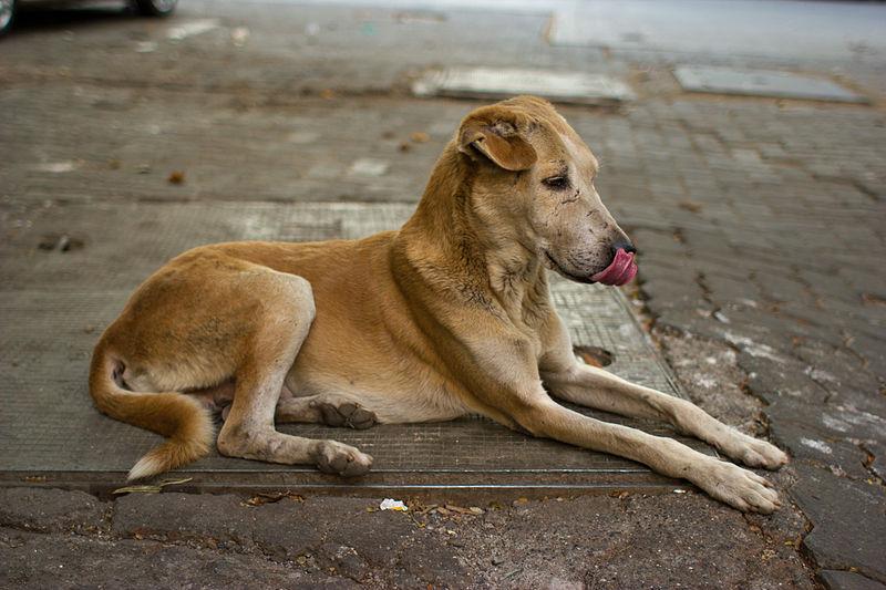 Abandonan 40 perros en Vélez, Málaga