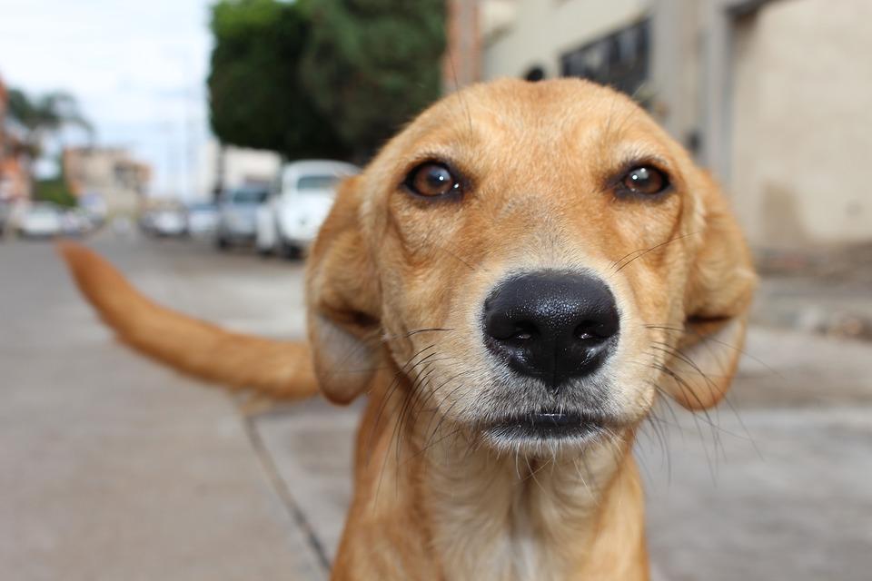 Abandonan 40 perros en la costa de Málaga