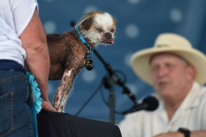Descubre el concurso de los perros más feos del mundo
