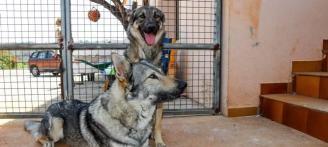 Dos perros salvan a su dueña de un incendio en Llíber