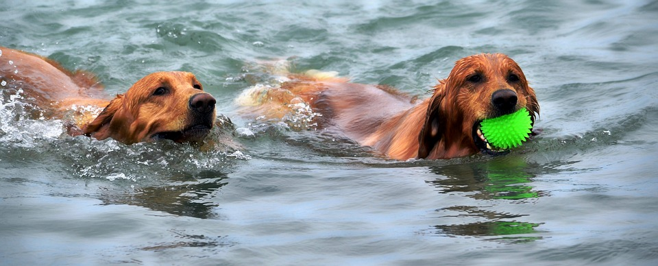 La hidroterapia para perros se ha vuelto muy popular