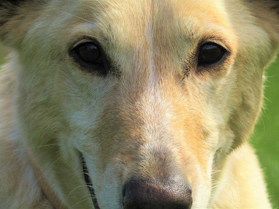 Los perros se comunican con nosotros mediante gestos-2