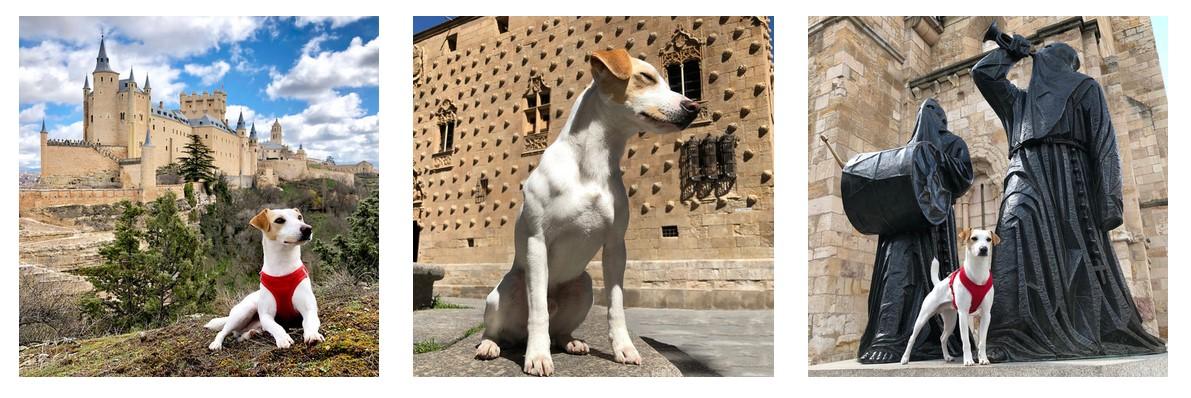 Pipper el perro turista ¡va a dar la vuelta a España!