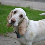 ¿Por qué la ley debe proteger también a los perros de caza?