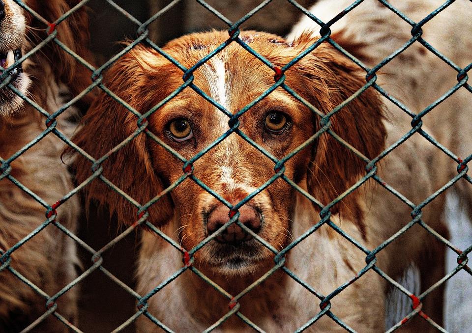 Salva a los perros de Yulin en la campaña de firmas de Avaaz