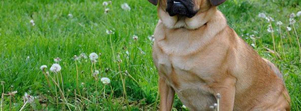 Tener un perro previene las enfermedades del corazón