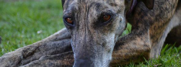 Descubre la historia de los perros de la Pradera de Bea Heyder