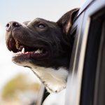Recomendaciones para viajar con tu perro en coche