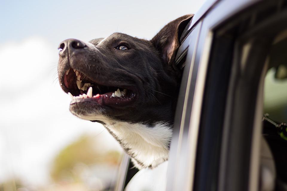 Cómo viajar con tu perro en el coche bien