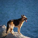 ¿El agua de mar es peligrosa para los perros?
