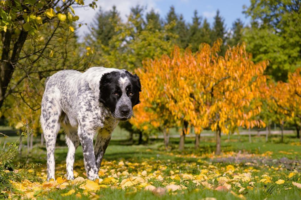 Los perros detectan cuando los árboles están enfermos