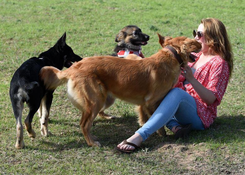 Los perros ven el aura de las personas