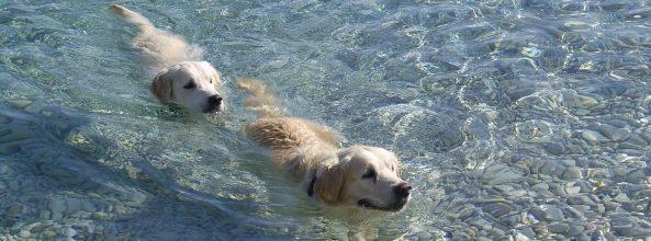 Playas para perros España 2018