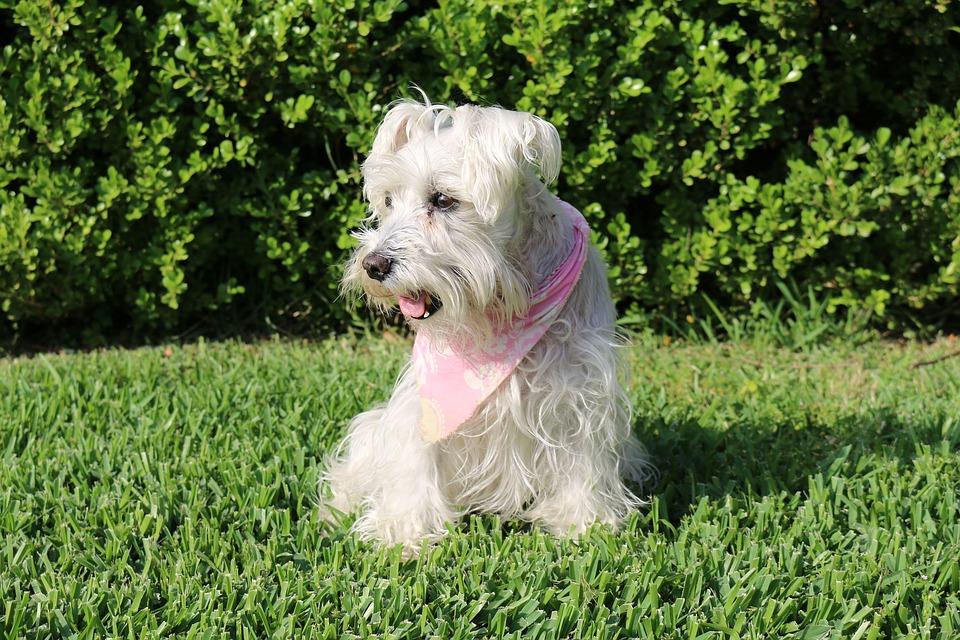 ¿Sabes que los perros tienen recuerdos de sus dueños?
