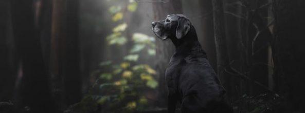 Vuelve el concurso de las mejores fotografías de perros