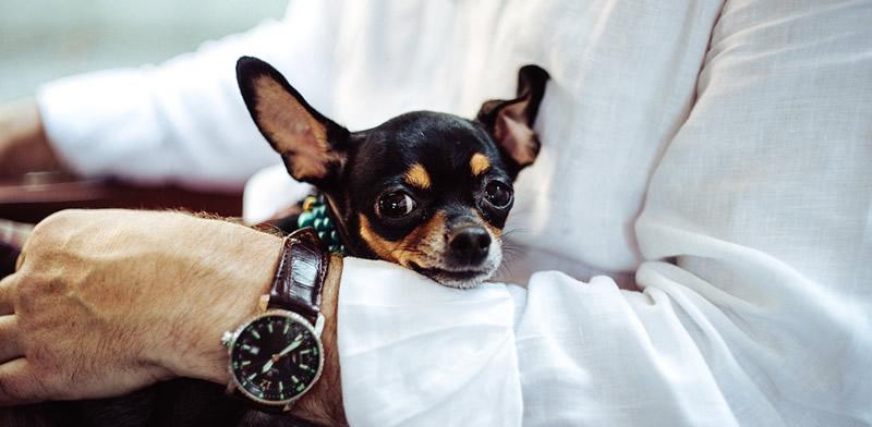 El instinto de los perros les permite identificar determinadas actitudes del ser humano