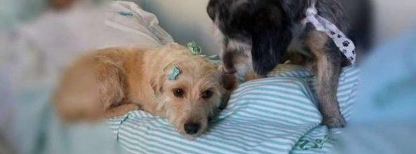 2 perros esperan a su amo durante días en un hospital