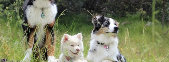 Alerta en parques para perros de Alicante por salchichas con clavos