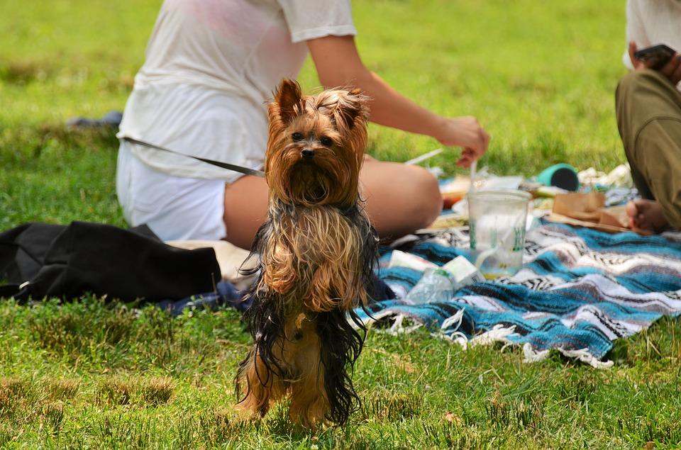 ¡Atención Alicante: cuidado con las salchichas con clavos en parques para perros!