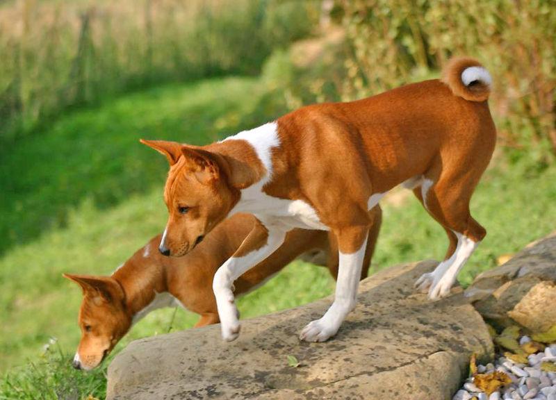 Descubre el perro que no ladra