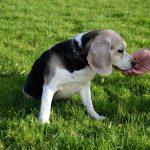 ¿Los perros sudan? ¿Cómo transpiran?