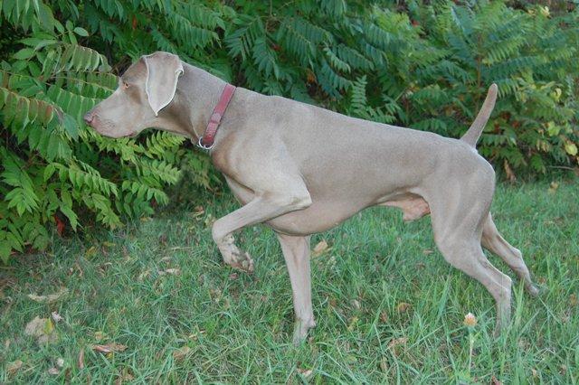 ¿Por qué los perros te buscan con la mirada cuando defecan?