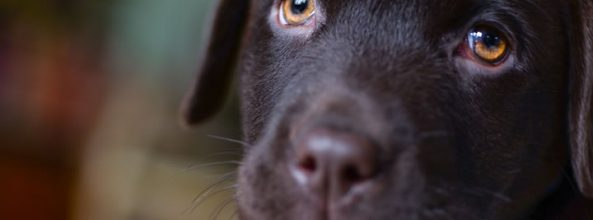 Perro salva a su familia de morir en Kerala