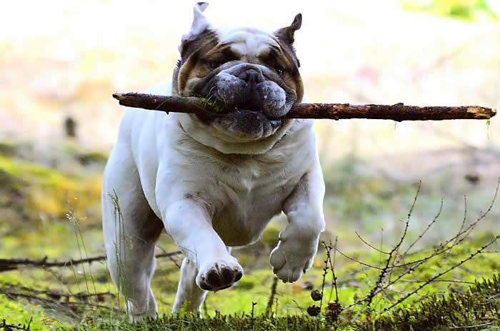 Crece el número de perros registrados en Galicia