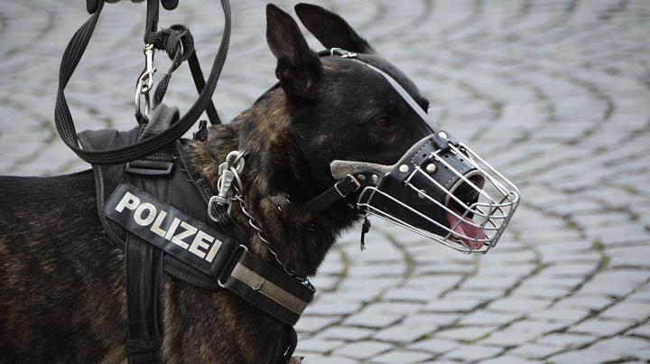 Los perros policía de Viena llevarán botitas