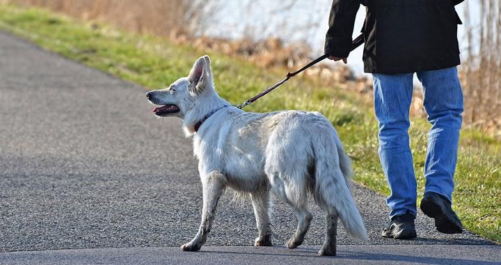 ¿Cuánto tiempo es recomendable pasear a un perro?
