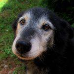 Cómo reacciona un perro ante el sacrificio … ¡no te separes nunca de él!