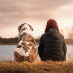 Los antibióticos administrados a cachorros, causantes de futuras enfermedades en nuestros perros