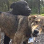 Perros callejeros abandonados se convierten en policías