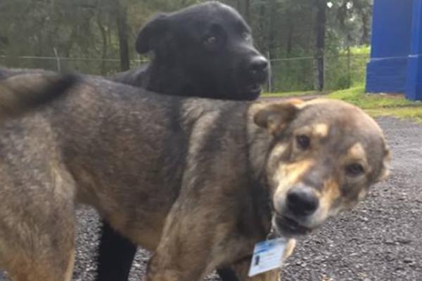 Perros callejeros se convierten en policías