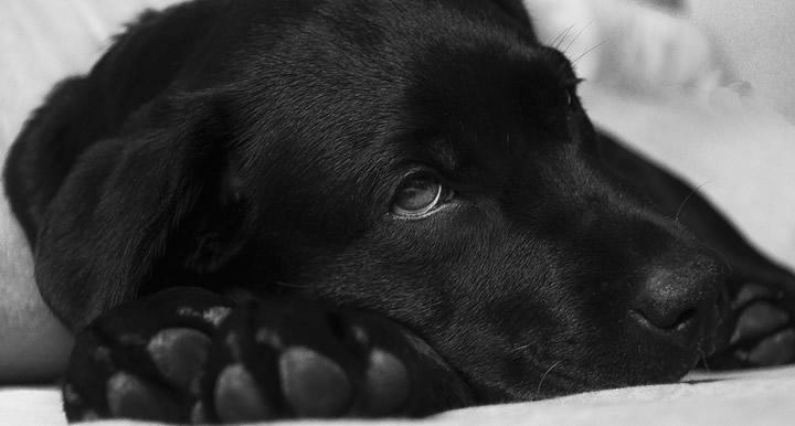 ¿Debemos dar antibióticos a nuestros perros? Descubre los peligros