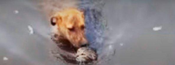 Un perro salvó a un gato de ahogarse en Estados Unidos
