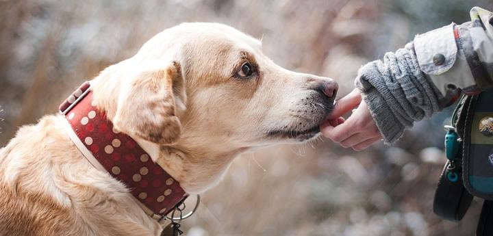 ¿Perros para ayudar a víctimas de violaciones?