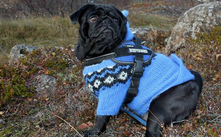 ¿Perros y dueños vestidos igual?