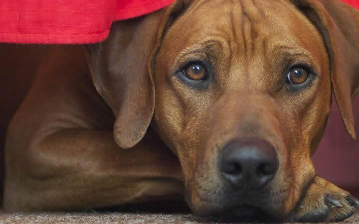 ¿Existe el síndrome postvacacional en los perros?