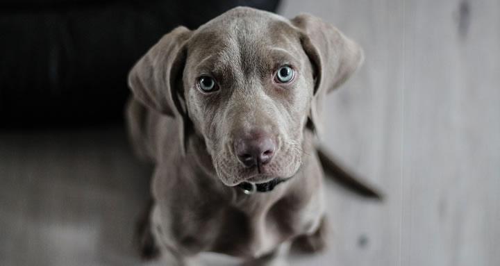 Perros abandonados que se convierten en terapeutas de niños