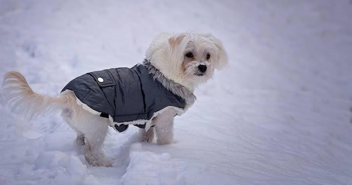 H&M lanzará en Reino Unido una colección de moda para perros