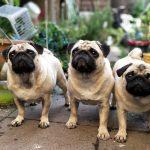 Amazon venderá comida de perros de alta calidad
